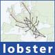applications/packetloss/gui/img/lobster-logo.jpg